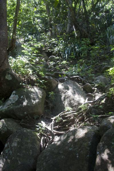 Foto de Easy stretch of the trail to the summit of Petit PitonPetit Piton - Santa Lucia