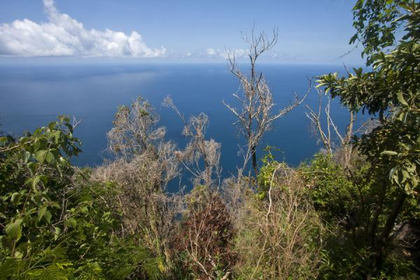 Foto de View from the trail of Petit PitonPetit Piton - Santa Lucia