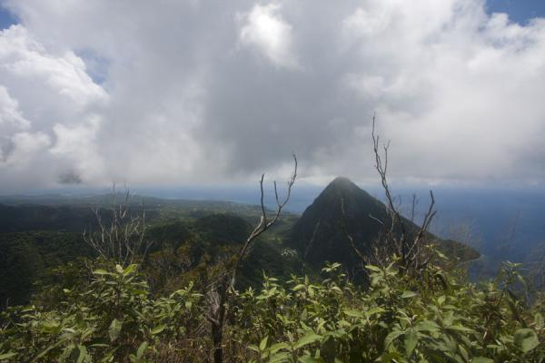 的照片 Gros Piton seen from the summit of Petit Piton - 圣卢西亚