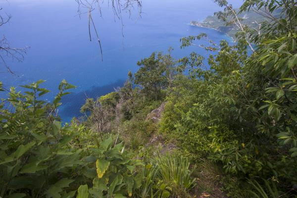Foto de Looking right into the sea from the trail to the summit of Petit PitonPetit Piton - Santa Lucia