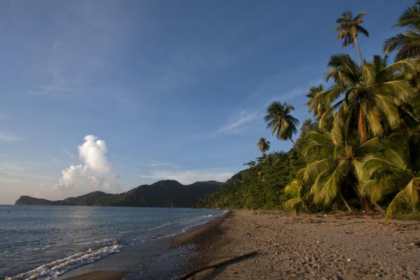 Malgretout beach with palm trees | Plages de Soufrière | Sainte Lucie