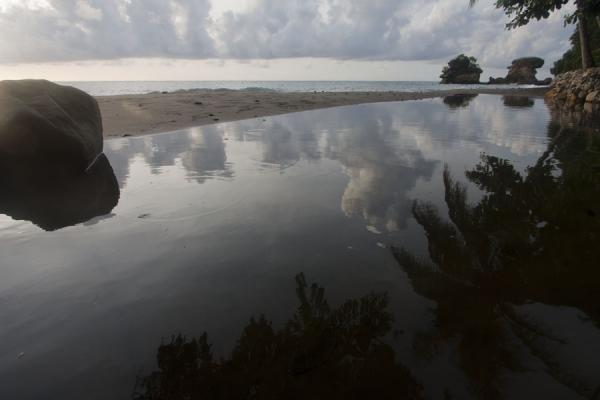 Photo de Sainte Lucie (Reflection of palm trees in a pond at Anse Chastanet beach)