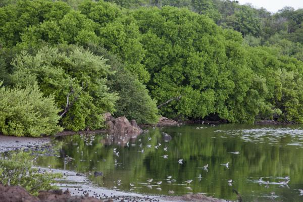 Salt Pond with trees and birds | Mayreau | Saint Vincent and the Grenadines