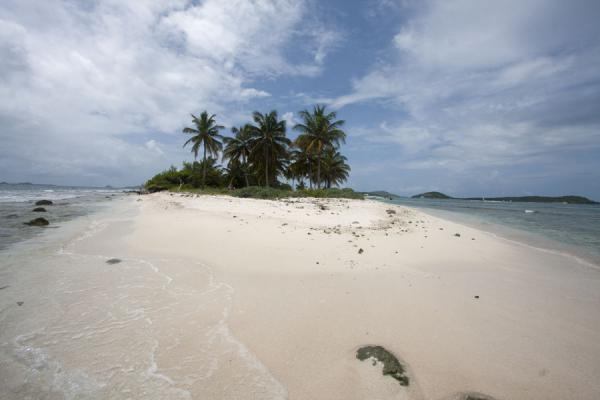 Picture of Tobago Cays (Saint Vincent and the Grenadines): Sand and palm trees rising out of the sea: Petit Tabac island