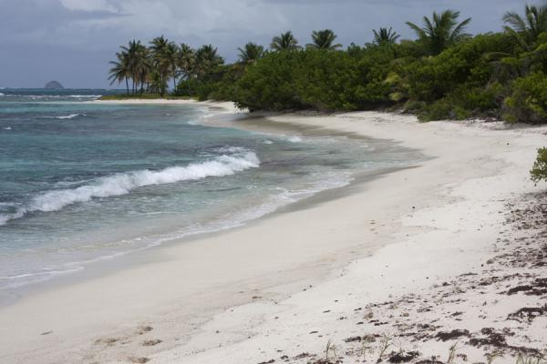 Picture of Tobago Cays (Saint Vincent and the Grenadines): White sand beach on Petit Tabac island