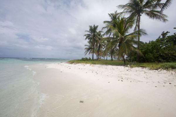Foto van White sand on the beach at Petit Tabac islandTobago Cays - Saint Vincent en de Grenadines