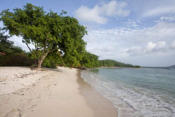 White and deserted Basin Beach with trees at the southernmost point of Union Island - 生猛升和科拉那低呢四 - 北美洲