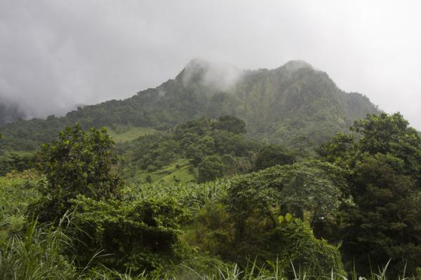 Mountain with clouds and forest at the Vermont trail | Vermont nature trail | Saint Vincent and the Grenadines