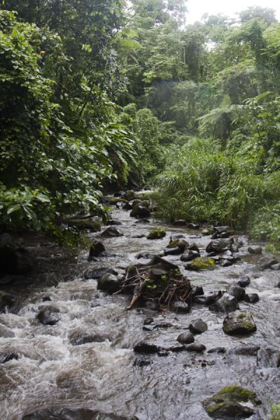 River on the approach of the Vermont trail | Vermont nature trail | Saint Vincent and the Grenadines