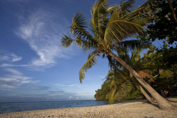Photo de Samoa (White sand beach of Namua island with palmtree hanging over it)