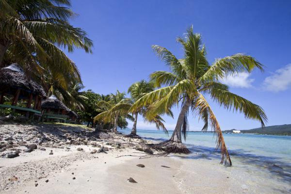 Picture of Namua island (Samoa): Beach with palmtrees on Namua island