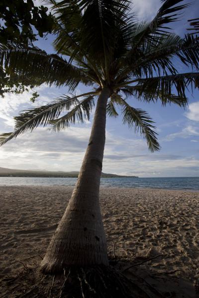 Picture of Namua island (Samoa): Looking towards Upolu island from behind a palmtree on Namua island