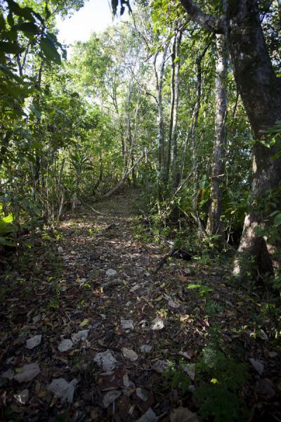 Picture of Namua island (Samoa): Trail on Namua island leading to the highest point