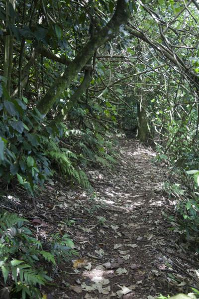 Trail through Mt. Vaea Scenic Reserve | Robert Louis Stevenson Museum | 萨摩亚群岛