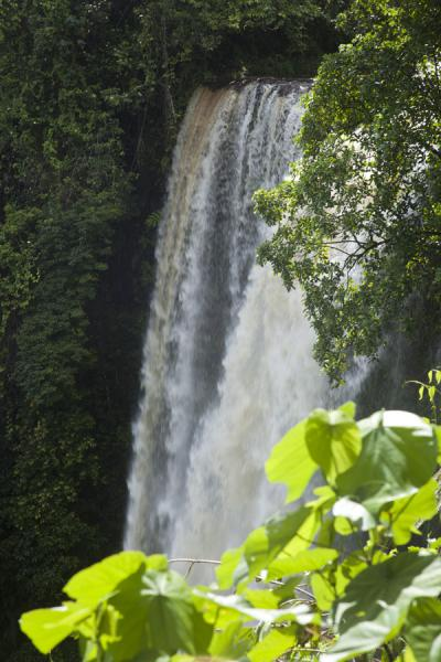 Picture of Powerful Fuipisia waterfall in the east of Upolu island