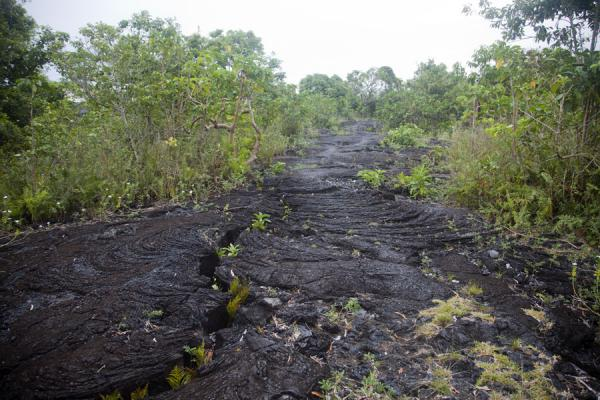 Picture of Lava field near SaleaulaSavai'i - Samoa
