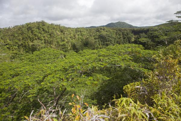 Foto di Samoa (The crater of Mt. Matavanu, filled with trees)