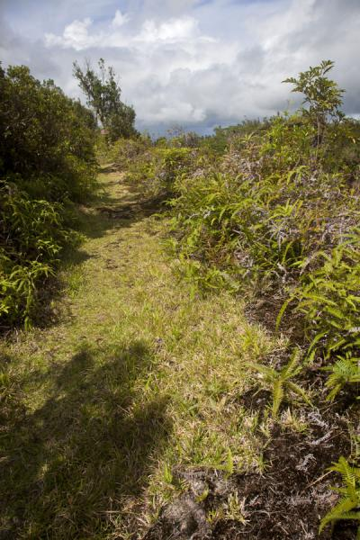 Trail along the rim of the crater of Mt. Matavanu | Savai'i lava fields | Samoa
