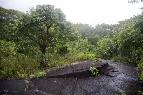 Picture of Savai'i lava fields (Samoa): Thick layer of lava with a big crack in it