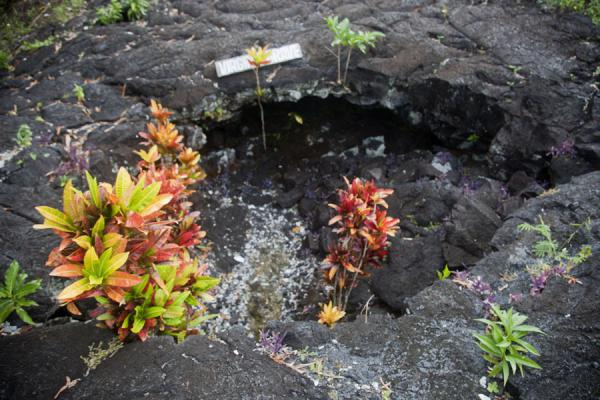 The Virgin's grave, untouched by the flow of lava | Champs de lava de Savai'i | Samoa