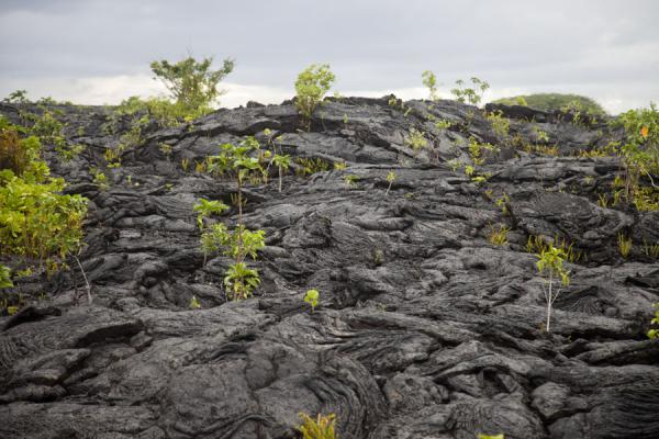 Foto van Lava field with vegetation growing through cracks - Samoa - Oceanië