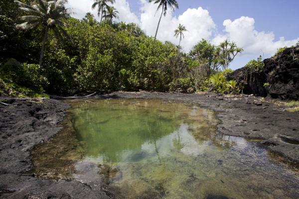 Picture of To Sua trench (Samoa): Pool in the lava field of To Sua surrounded by palm trees