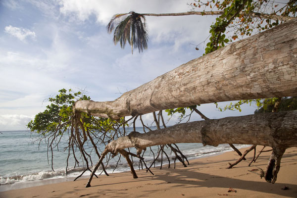 Trees lying on the beach at Praia Cajù | Belo Monte hike | São Tomé and Príncipe