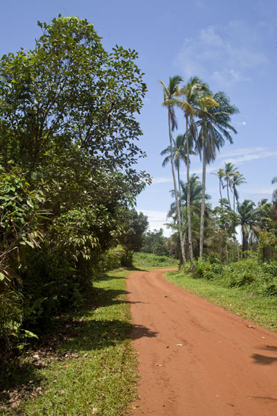 The dirt track towards Bom Bom Island | Bom Bom Island | São Tomé and Príncipe