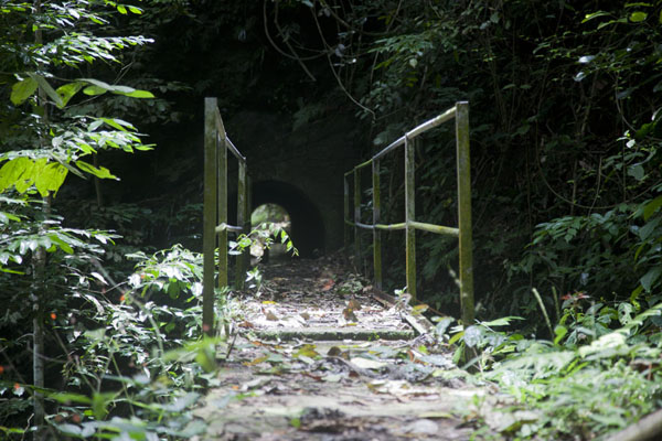Bridge and tunnel in the forest | Cascata Angolar | São Tomé and Príncipe