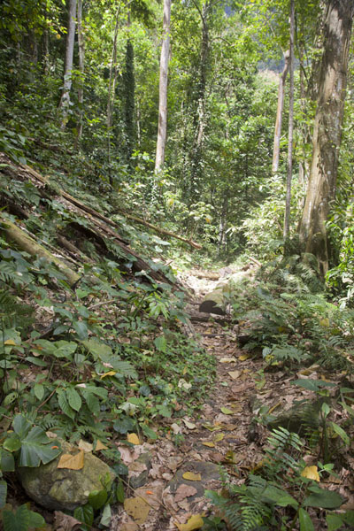 Trail leading up to Cascata Angolar | Cascata Angolar | São Tomé and Príncipe
