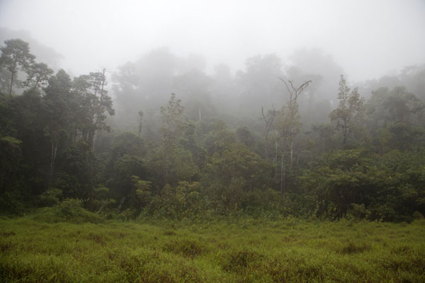 View from Lago Amelia with a cloud-covered rainforest | Lago Amelia | São Tomé and Príncipe