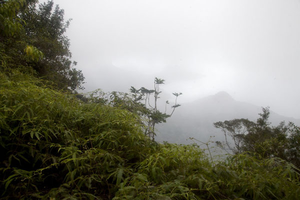 Misty view from the top: Pico Papagaio in the rain | Pico Papagaio | São Tomé and Príncipe