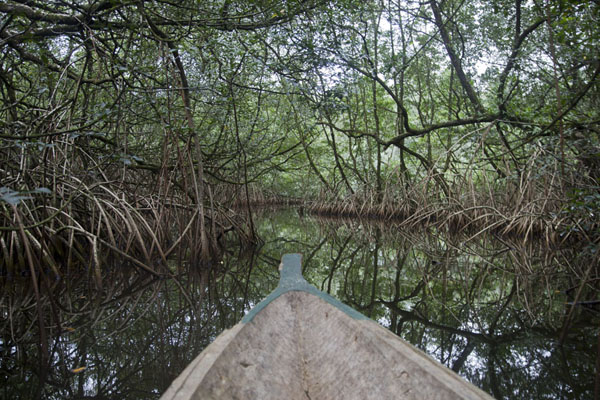 Picture of Southern São Tomé (São Tomé and Príncipe): Sailing through the mangrove forest by pirogue