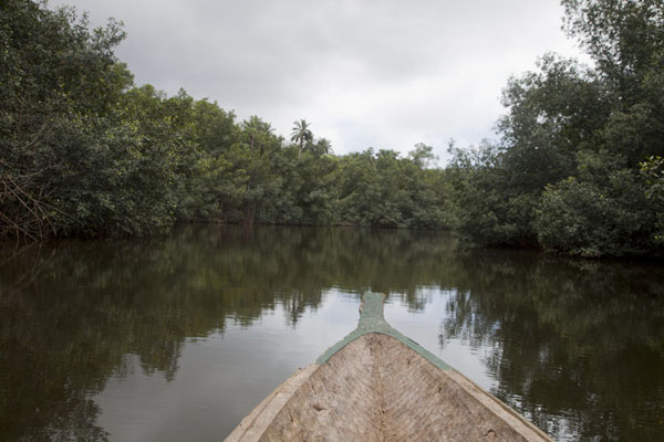 Looking ahead in one of the channels running through the mangrove forest | Southern São Tomé | São Tomé and Príncipe