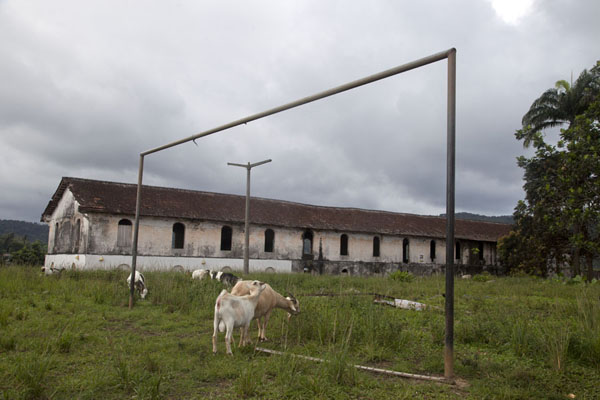 Football field with goats and colonial building in the background in Porto Alegre | Southern São Tomé | São Tomé and Príncipe