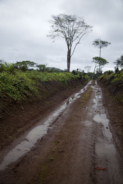 Dirt track leading north from Praia Jalé | Southern São Tomé | São Tomé and Príncipe