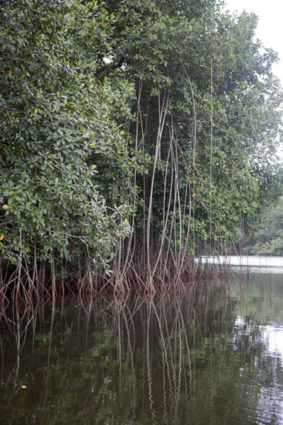 The mangrove lagoon just outside Porto Alegre | Southern São Tomé | São Tomé and Príncipe