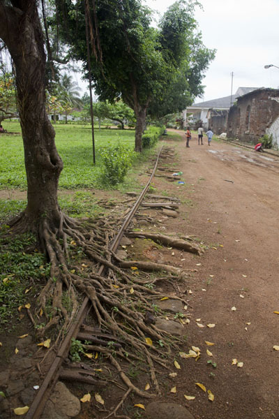 Old railway track overgrown by roots at Sundy | Sundy | São Tomé and Príncipe