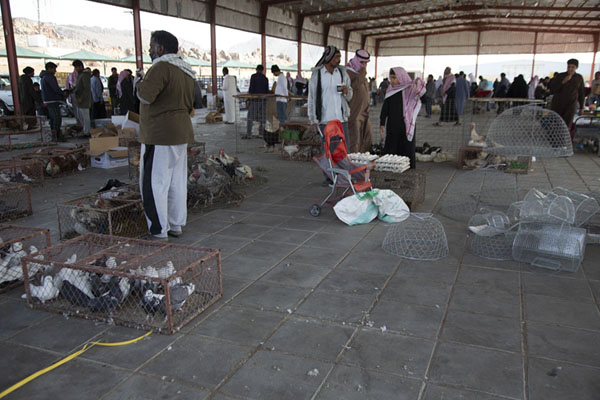 The hall in which vendors sell live animals | Mercado de los viernes de Hail | Arabia Saudita