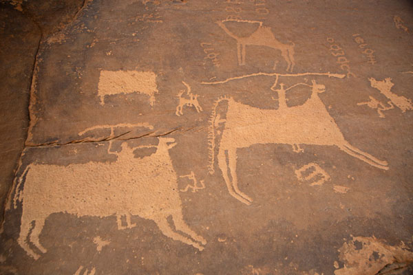 Rock carving of oxen-mounted hunters | Petroglifi di Jubbah | Arabia Saudita