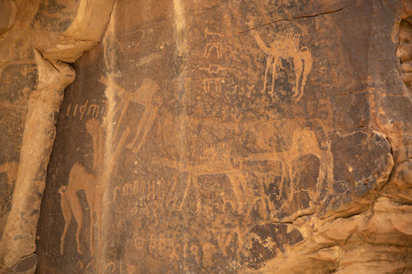 Foto van Camels carved on a rock near JubbahJubbah - Saoedi Arabië