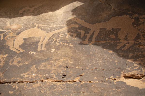 Foto van Camels carved on one of the many decorated rocks at JubbahJubbah - Saoedi Arabië