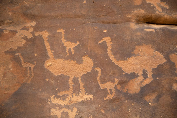 Foto van Birds (ducks? ostrich?) carved on a rock at JubbahJubbah - Saoedi Arabië