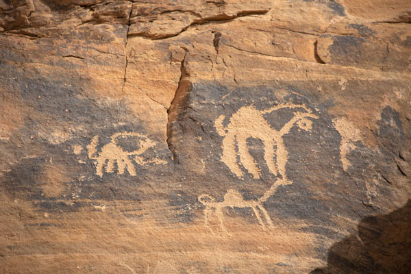 Several animals carved on a rock | Pétroglyphes de Jubbah | Arabie Saoudite