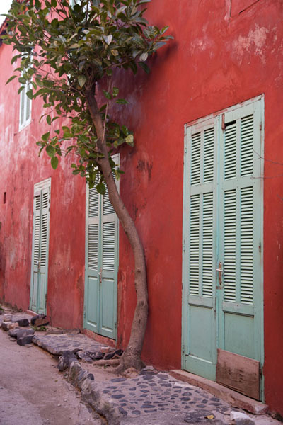 Picture of Brightly painted house on Gorée island with tree growing against its wall