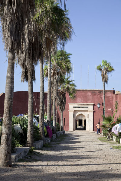Picture of Palm trees lining the access to the citadel on the north side of the island, housing a museumGorée - Senegal