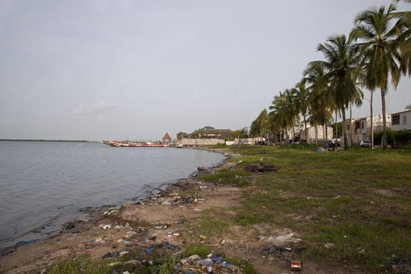 The riverbank of the Casamance river with palm trees | Ziguinchor | Senegal