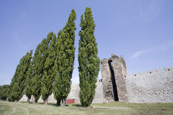 Foto van Servië (Poplar trees standing next to the eastern wall of Smederevo Fortress)