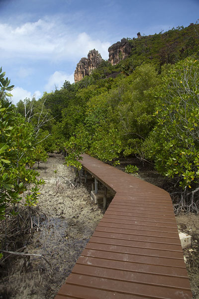 Picture of Curieuse island (Seychelles): Boardwalk through the mangroves on Curieuse island