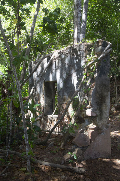 Picture of Curieuse island (Seychelles): Ruined wall on Curieuse